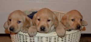 Sun's basket pupsFDSC_0703