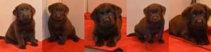 male pups F24'14