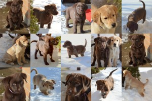 pups mar15'144pup collage