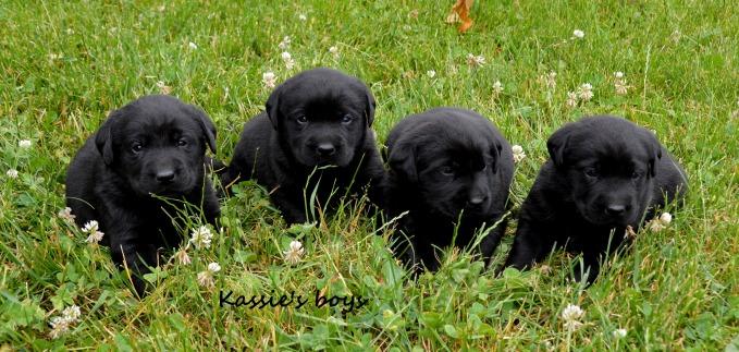 Kassie's Boys 3 weeks