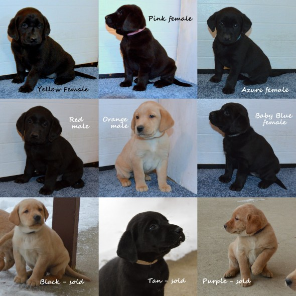 beautys-6weeks-collage