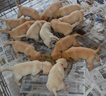Simone's hungry puppies
