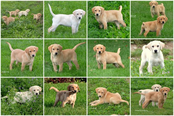 4 pups collage Oct '18