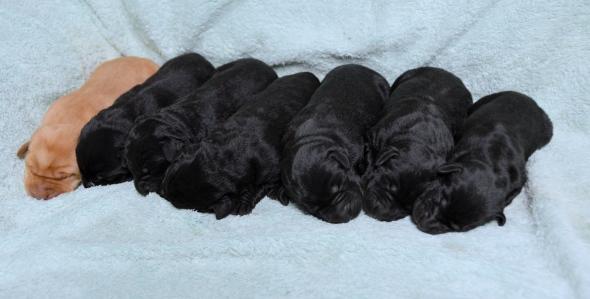 Beauty's '19 pups @4daysDSC_3100