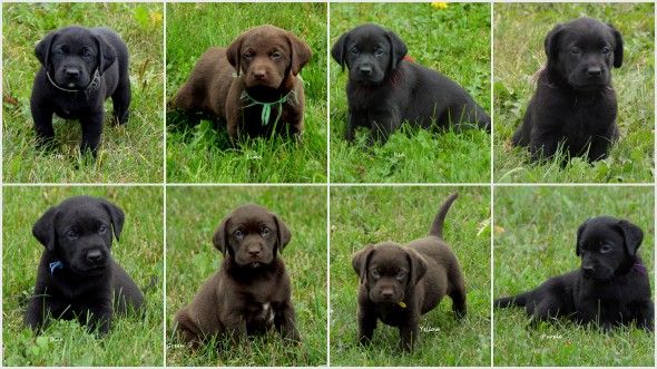 Kristie's '19 pups collage